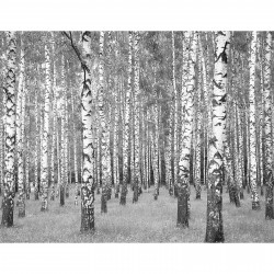Fototapety Birkenwald AS403706 A.S. Création Design Print