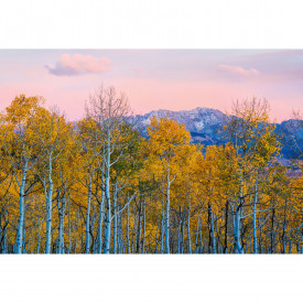 Fototapety Birches and Mountains DD118912 A.S. Création Designwalls