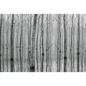 Fototapety Birch Forest in the Water DD118946 A.S. Création Designwalls