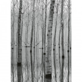 Fototapety Birch Forest In The Water DD119083 A.S. Création Designwalls