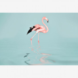 Fototapety FlamingoWater DD119777 A.S. Création ARTist